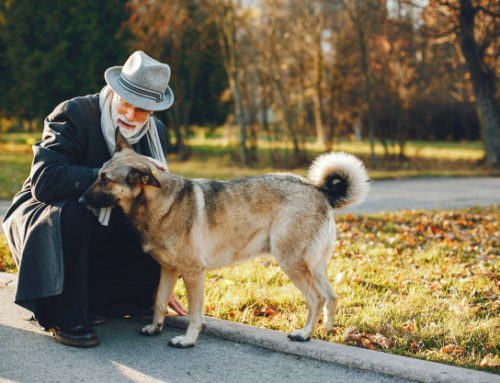 10 Ways to Keep Your Old Dog Healthy and Happy