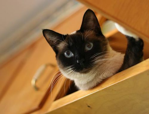 The 10 Most Common Poisons That Affect Cats
