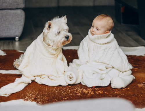 6 Simple Steps to Boost Your Dog's Immune System
