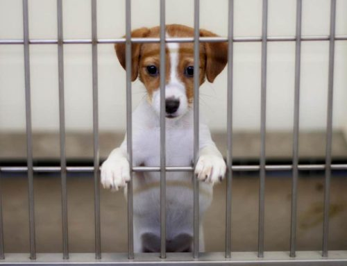 Why is important helping animal in shelters